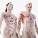 3D Full Male And Female Anatomy Set model